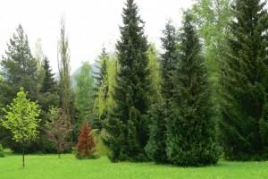 arboretum-7.jpg