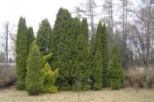 arboretum-8.jpg