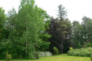 arboretum-9.jpg