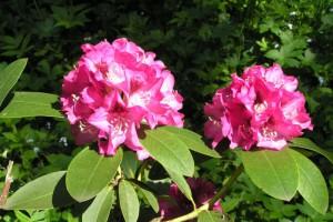 arboretum-1.jpg