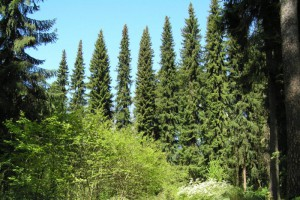 arboretum-2.jpg
